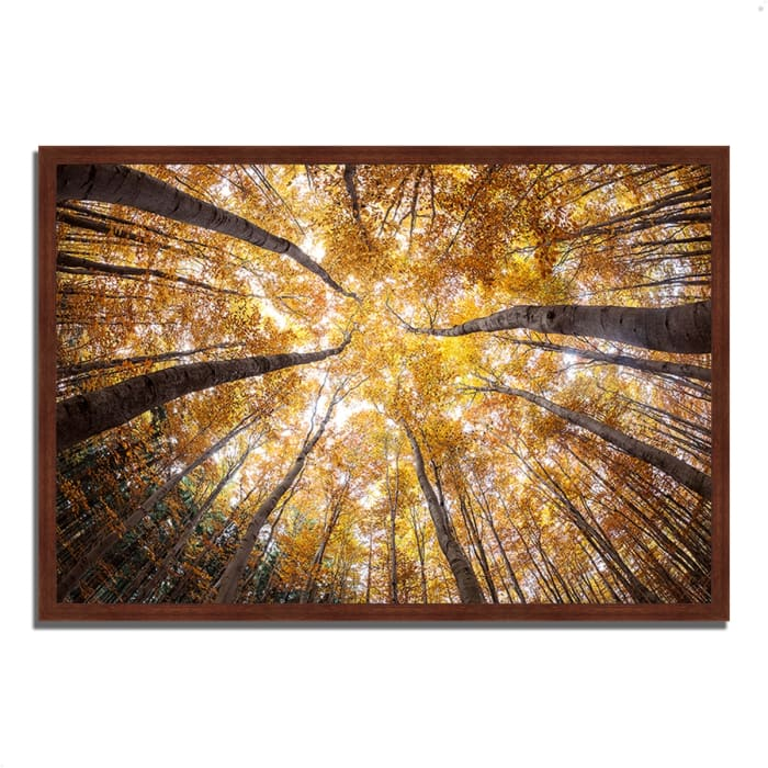 Framed Photograph Print 38 In. x 26 In. Reach For The Sky Multi Color