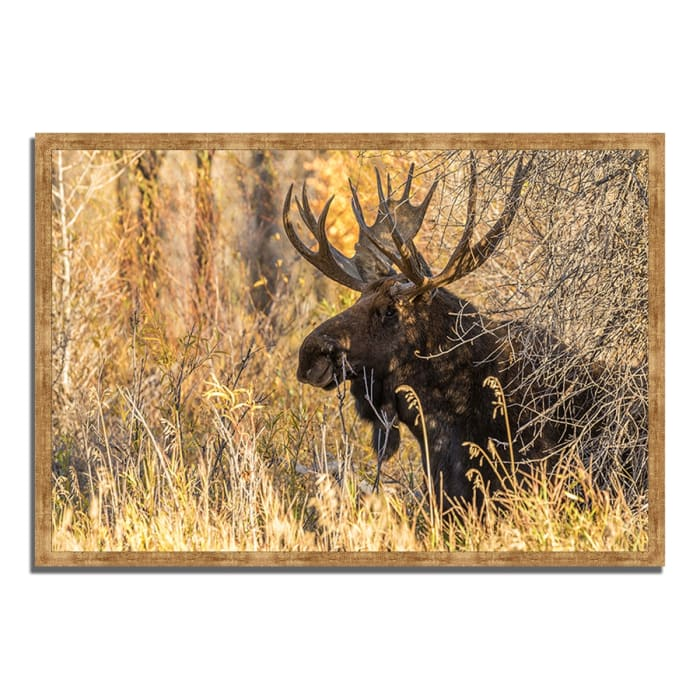 Framed Photograph Print 32 In. x 22 In. Black Antler Moose Multi Color