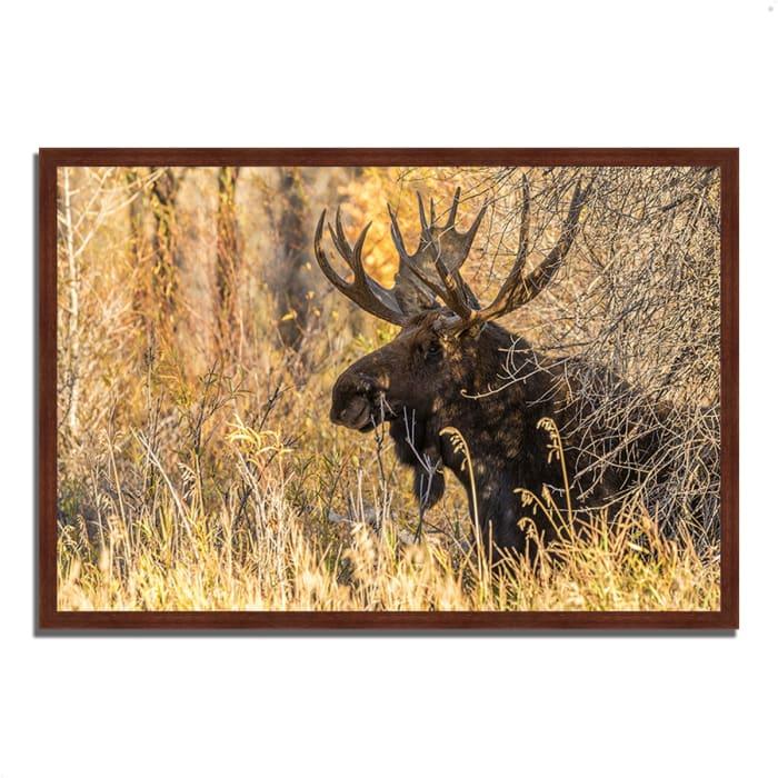 Framed Photograph Print 38 In. x 26 In. Black Antler Moose Multi Color