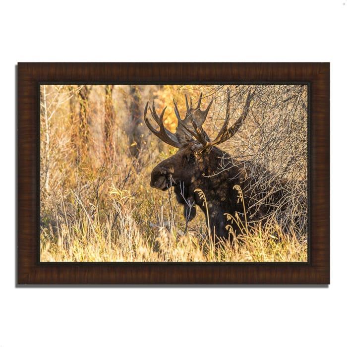 Framed Photograph Print 42 In. x 30 In. Black Antler Moose Multi Color