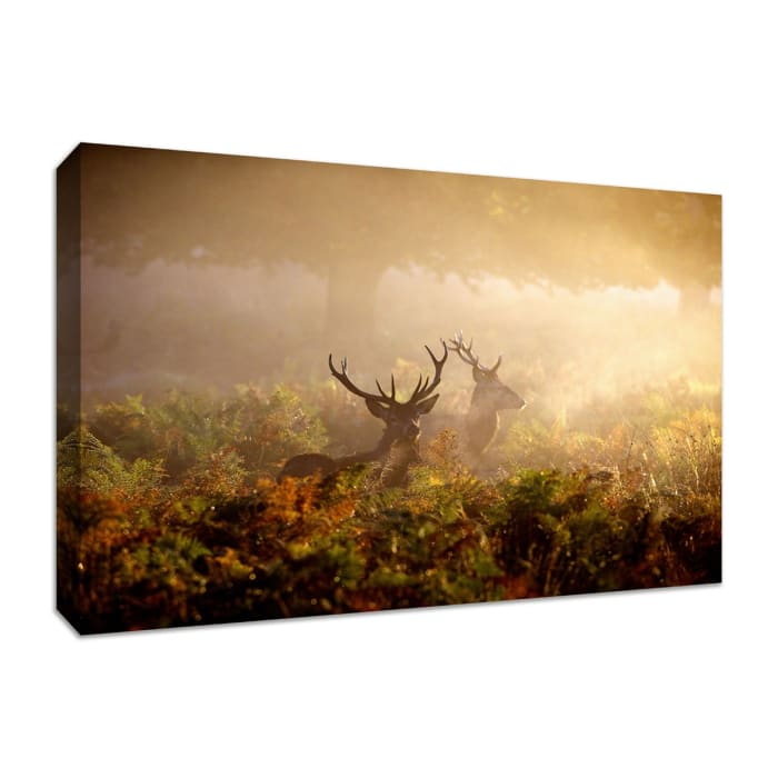 Fine Art Giclee Print on Gallery Wrap Canvas 36 In. x 24 In. Two Stags at Dawn Multi Color