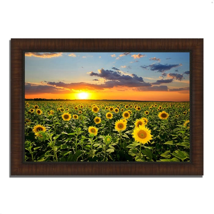 Framed Photograph Print 36 In. x 26 In. Sunflower Sunset Multi Color