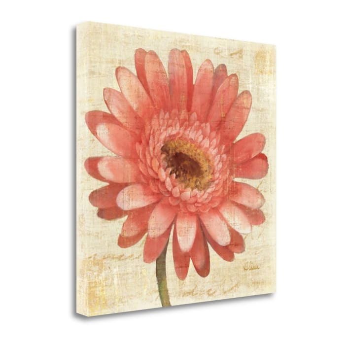 Fine Art Giclee Print on Gallery Wrap Canvas 20 In. x 20 In. Blushing Gerbera By Albena Hristova Multi Color