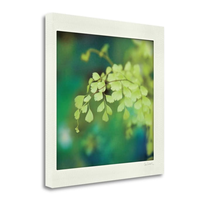 Fine Art Giclee Print on Gallery Wrap Canvas 20 In. x 20 In. Natures Fern II By Sue Schlabach Multi Color
