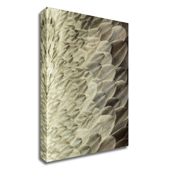 Volture II by Design Fabrikken Wrapped Canvas Wall Art