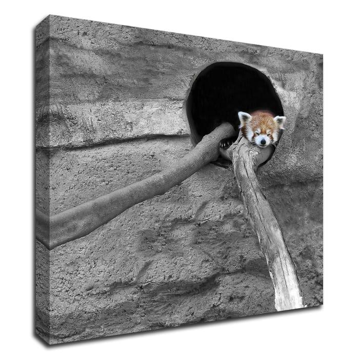 Red Panda Sleeping by Brooke T. Ryan Wrapped Canvas Wall Art