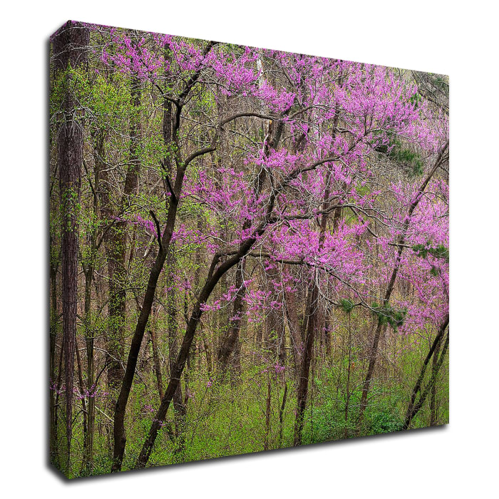 Redbud Tree by David Hammond Wrapped Canvas Wall Art