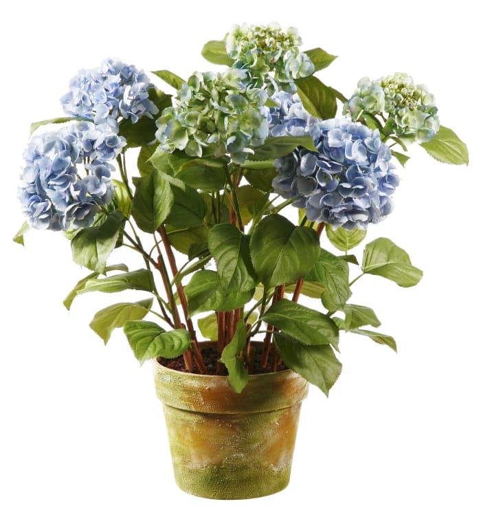 Hydrangea in Pot Floral Arrangement