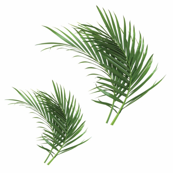 Palm Leaf Peel And Stick Giant Wall Decals