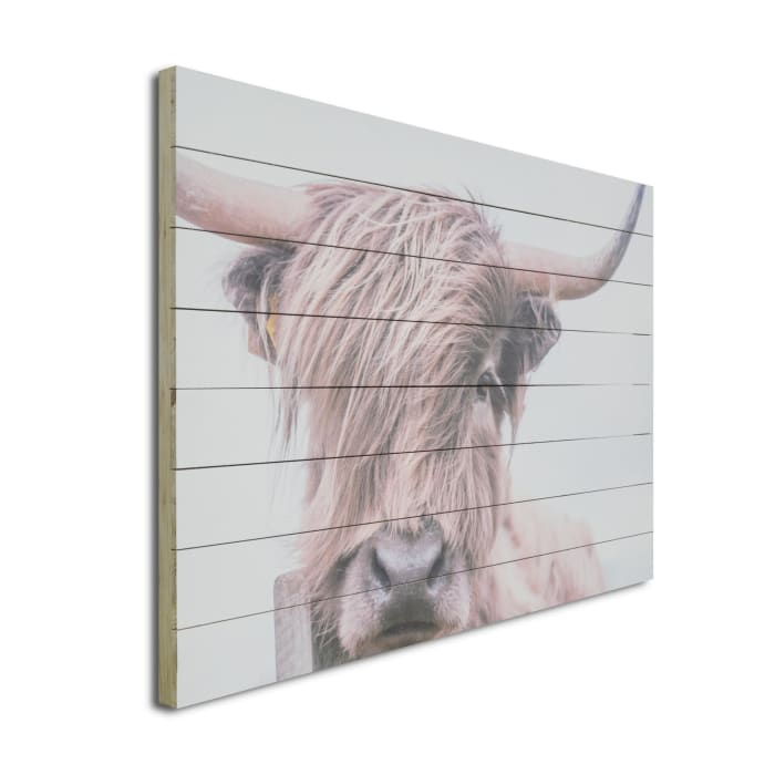 Highland Cow 24x36 Print on Wood Art