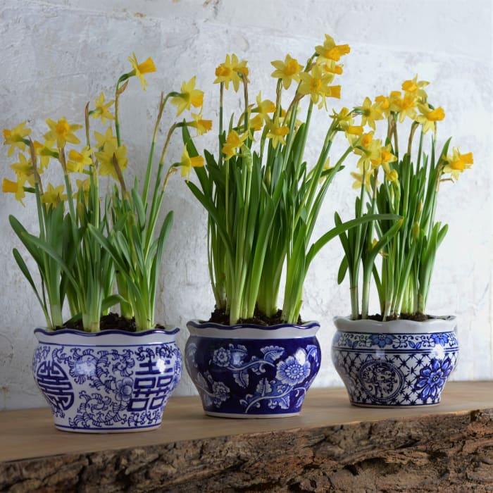 Blue and White Terrace Garden Planter Set