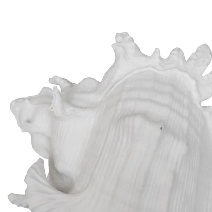 Conch Shell Sculpture