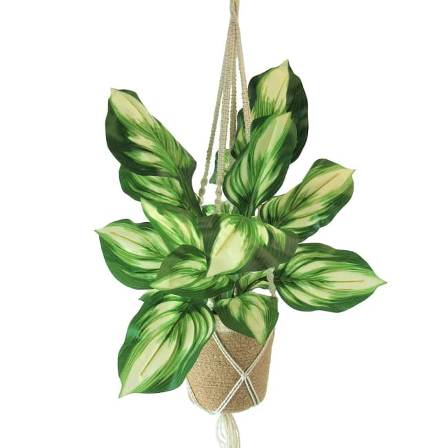 Hosta Plant in Fabric Hanging Basket