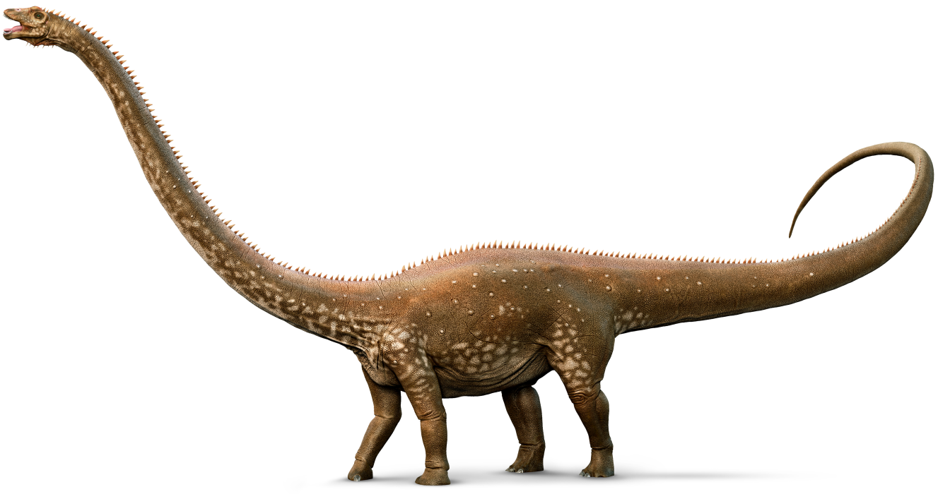 diplodocus_whole_amzt6e.png