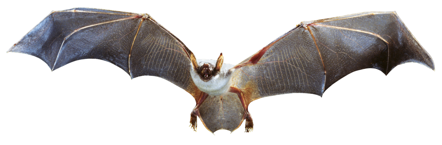 Read book microbats information about microbats PDF - Read Book Online