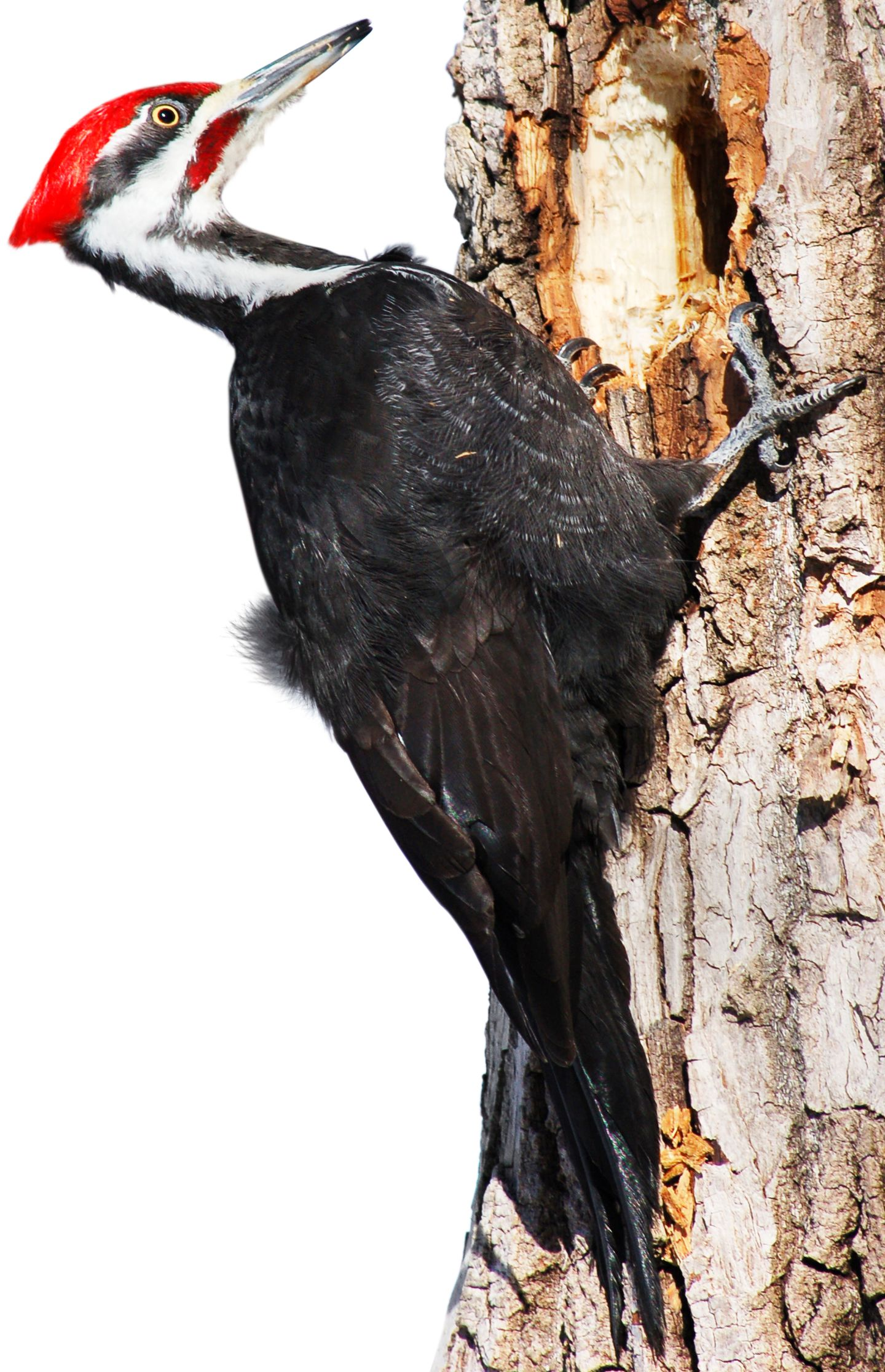 Types of Woodpeckers | Woodpecker Species | DK Find Out