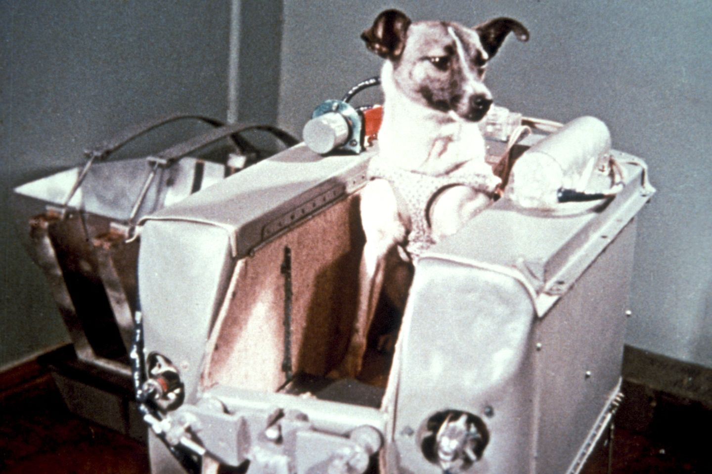 first animal in space laika - photo #2
