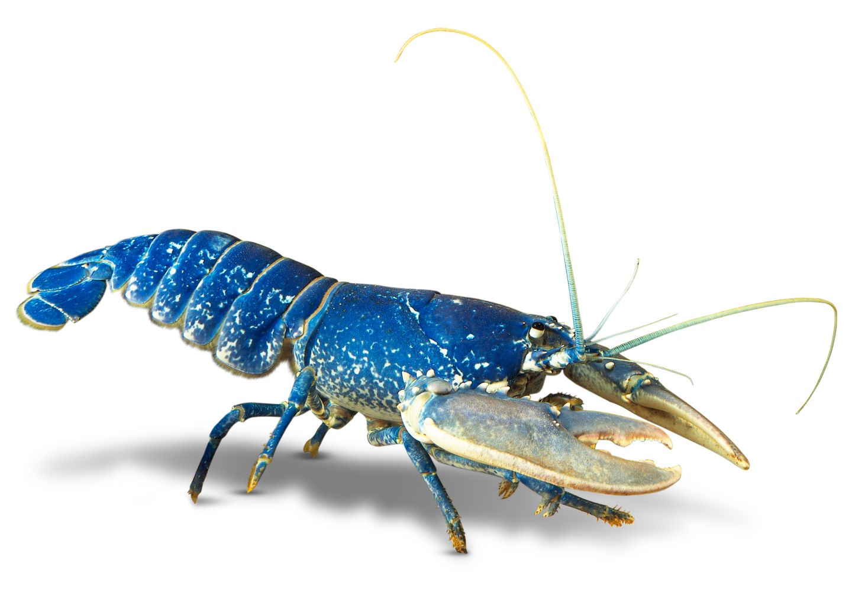 Arthropods Crustaceans What are crustaceans types of crustaceans dk ...