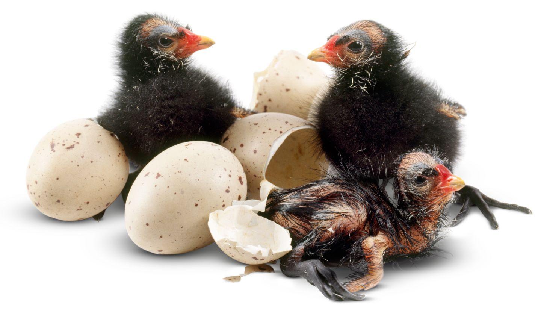 penguin bird nest