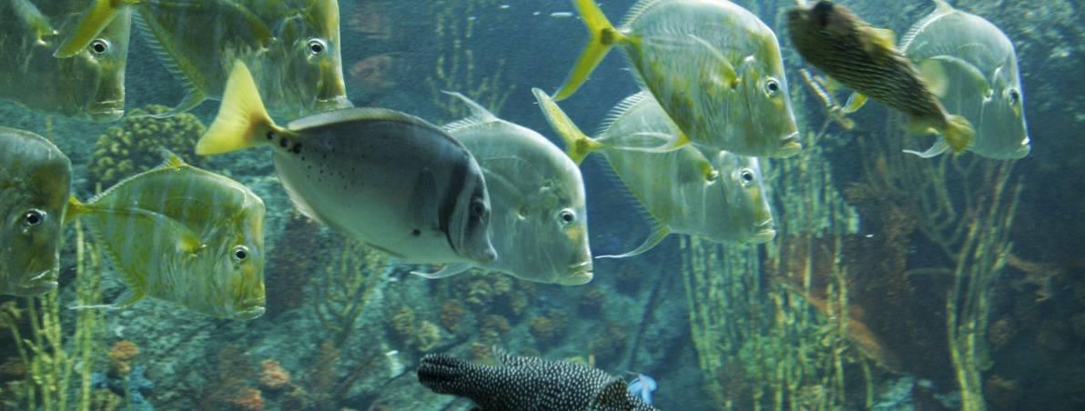 Aquarium Of The Pacific Los Angeles Dk Eyewitness Travel