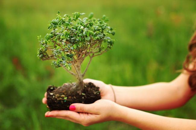 polusi tanah-alodokter