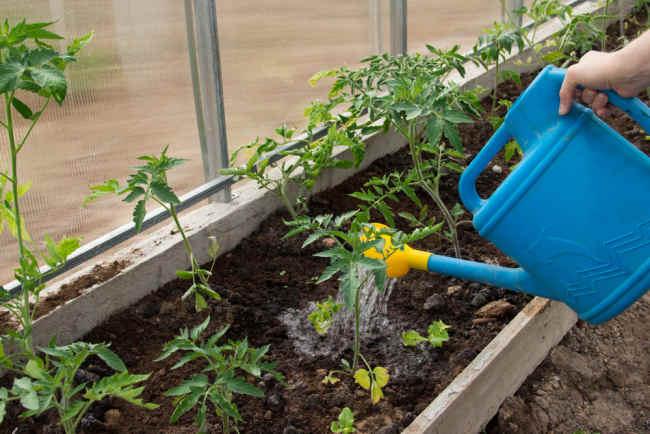 pestisida organik belum tentu lebih aman - alodokter