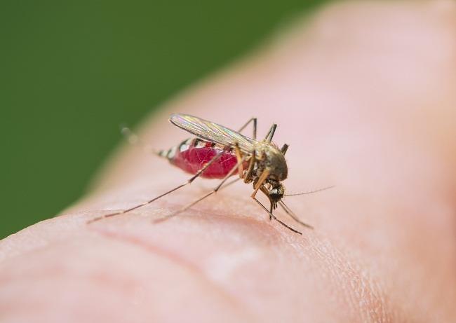 Ini Dia Trik Jitu Mengusir Nyamuk Tanpa Bahan Kimia (1)