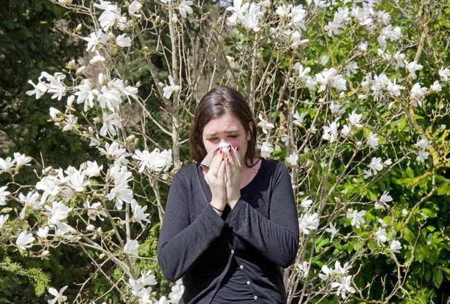alodokter-rinitis-alergi