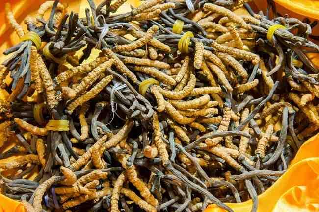 Manfaat Cordyceps untuk Membantu Mengobati Penderita Infeksi Saluran Pernafasan - alodokter