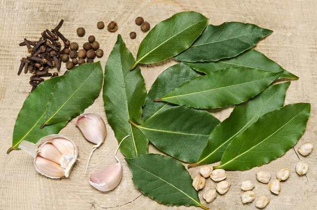 manfaat daun salam-alodokter