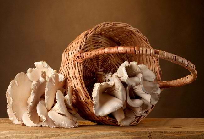 manfaat jamur tiram - alodokter