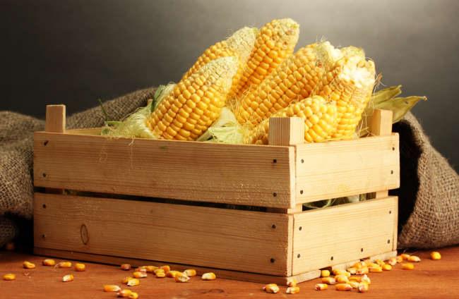spesial dari kampung 3 manfaat jagung yang luar biasa - alodokter