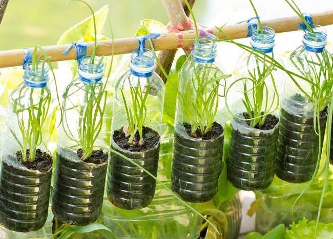 Belanja Sayur Gratis di Rumah Berkat Urban Farming - Alodokter