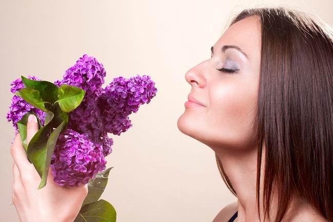 mengintip anatomi hidung manusia - alodokter