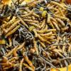 Manfaat Cordyceps untuk Membantu Mengobati Penderita Infeksi Saluran Pernafasan