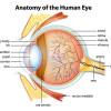 Melihat Lebih Dalam Anatomi Mata Anda
