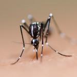 Mengenal Habitat dan Kebiasaan Nyamuk Demam Berdarah Agar Mudah Menanggulanginya