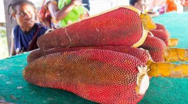 Nikmati Manfaat Buah Merah dari Tanah Papua