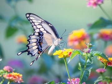Сон бабочка в руках