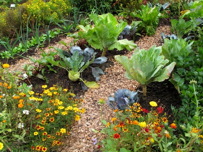 Таблица совместимость растений в саду