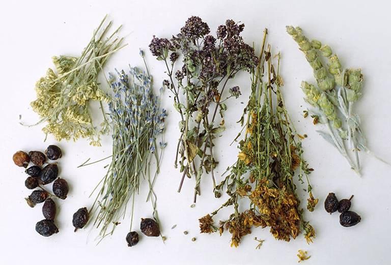 Бизнес на лекарственных травах с чего начать