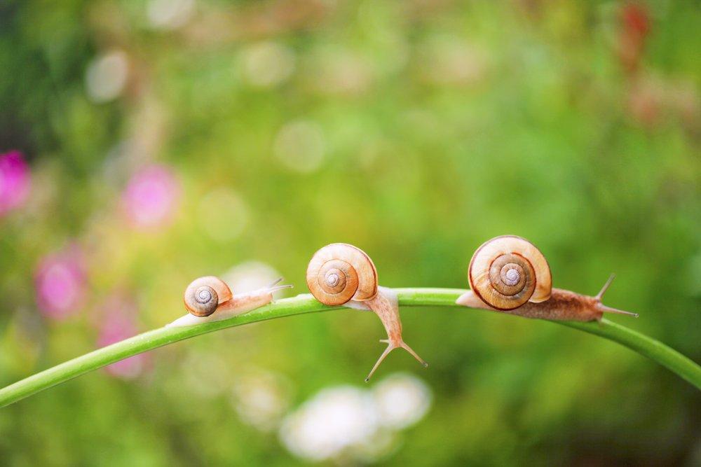 snails life