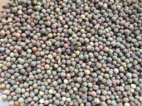 Семена гороха-пелюшки