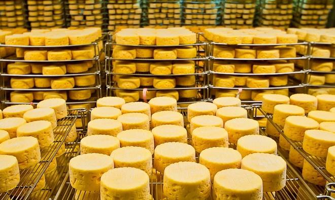 Оборудования для производства сыра