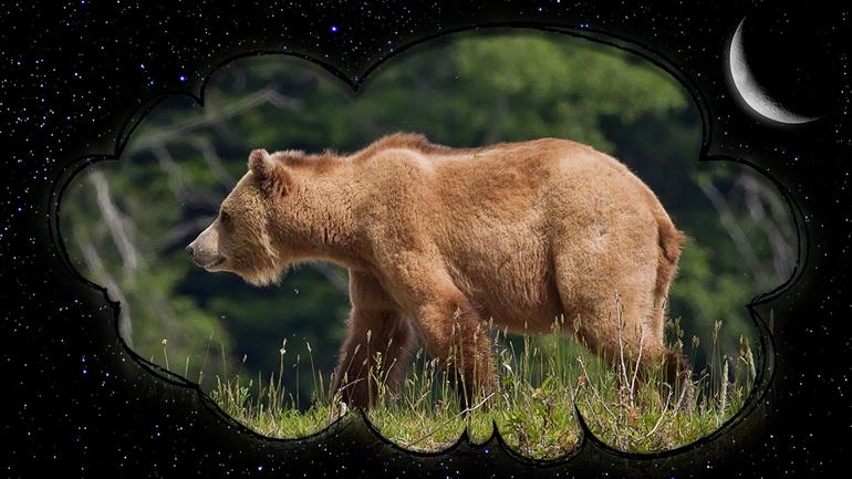 Приснились медведи с медвежатами