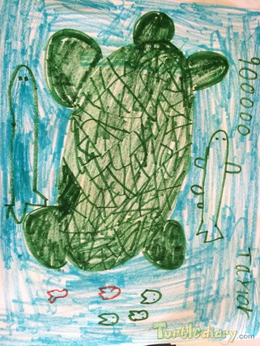 Turtle Cash - Design Your Own Money Contest March 2015 Submission