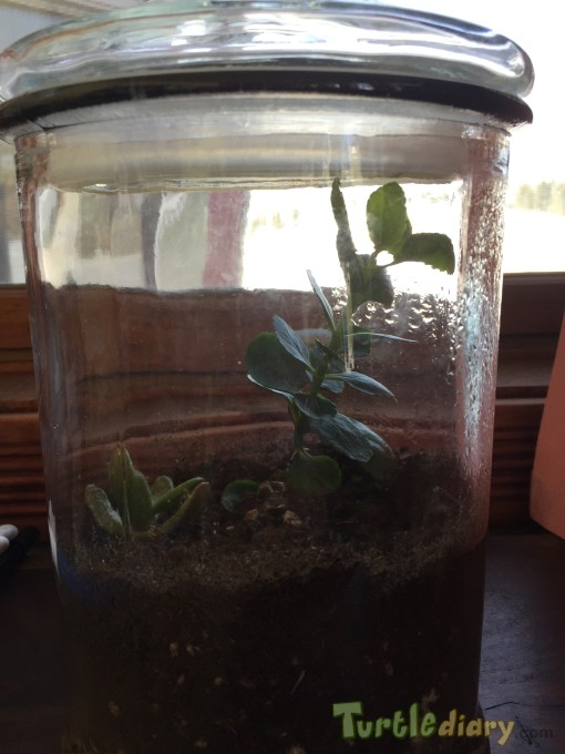 Terrarium created with clippings from a plant - Earth Day Contest April 2015 Submission