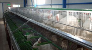 Бизнес по выращиванию кроликов