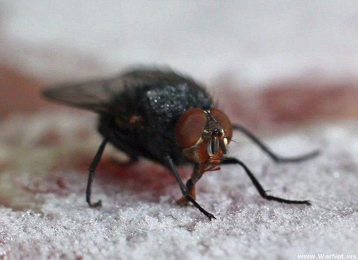Зимой мухи в доме