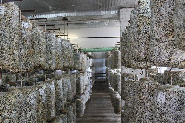 Грибная ферма